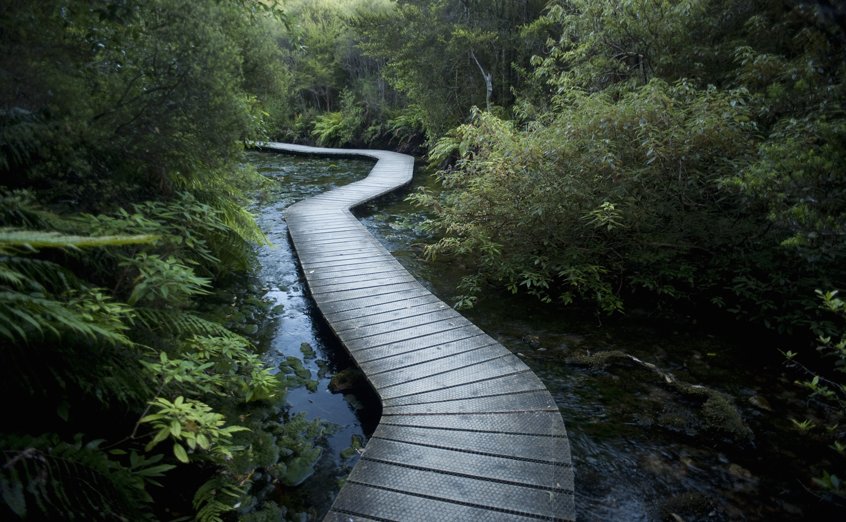 Winding Boardwalk through Forest, Pohara, Golden Bay District, Nelson Region, South Island, New Zealand